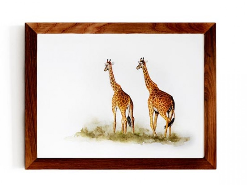 Animal Wildlife Print - A Walk To Remember - Giraffes